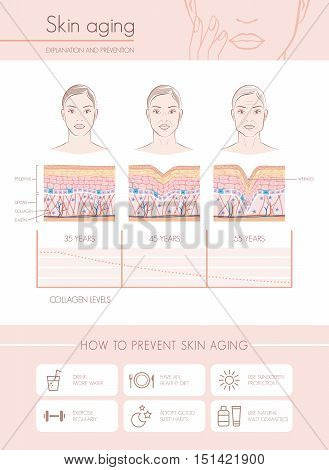 Skin aging diagrams and stages anti aging prevention tips and female faces