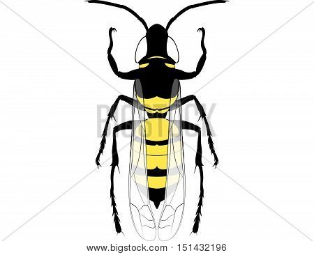 Hornet Wasp Fly Insect  Silhouette Isolated Vector