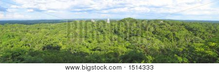 Nice View Over The Old Maya Ruins And The Peten Jungle, Tikal, Guatemala, Panorama