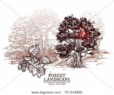 Sketch deciduous trees forest landscape with oak and birch on white background hand drawn vector illustration