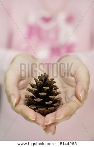 Pine cone in female hands