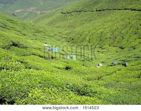Munnar Tea Valley
