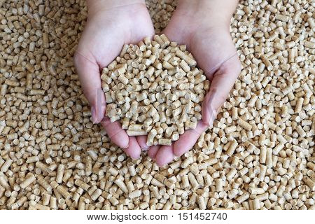 Wood pellets in female hands .Biofuels , an alternative fuel for the boiler. Wood pellets used as cat litter.