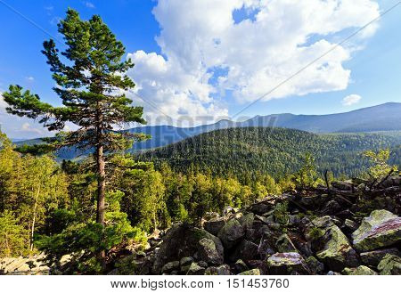 Summer Mountain View (carpathian, Ukraine).