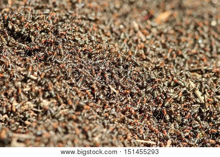 a bunch of red insects crawling in the anthill
