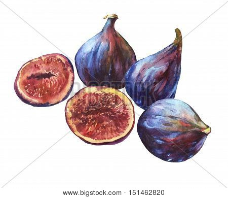Composition whole fresh figs and figs sliced in half, showing the red pulp and seeds inside.   Watercolor hand painting illustration on isolate white background.