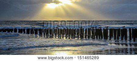 coastal evening scenery with wooden stacks in the Netherlands