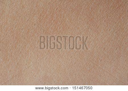 Macro Of Texture  Human Skin