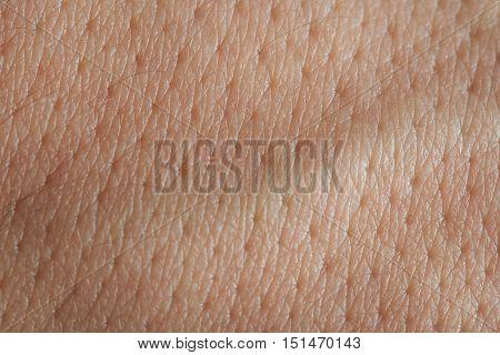 Pores On Man Skin