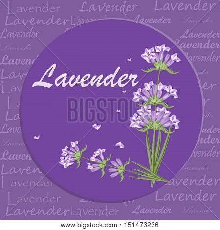 Bunch of lavender flowers violet blossom garden aromatic bloom. Aroma perfume nature lavender purple flower bouquet. Natural floral herbal bunch lavender aromatherapy purple flower vector.