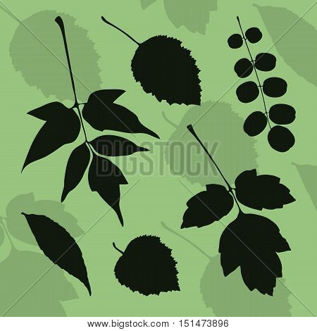 Silhouette of leaves of different species of trees on a green background. Stock vector illustration for design.