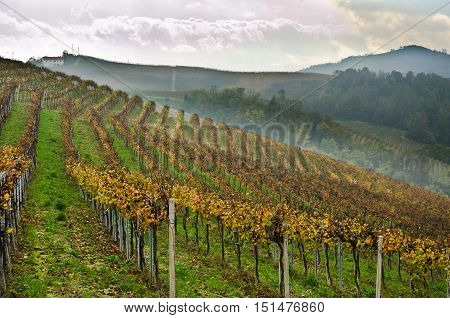 landscapes of Piedmont's Langhe region and its vineyards and excellent grape vines for the best Italian wines