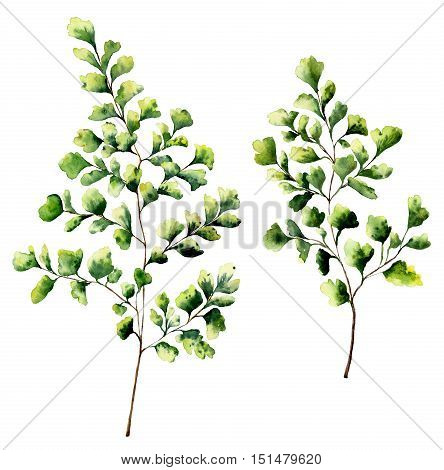 Watercolor maidenhair fern leaves and branches. Hand painted fern plants elements. Floral illustration isolated on white background. For design, textile and background
