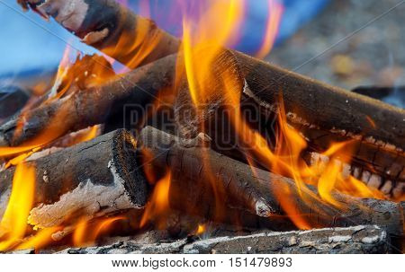 Bonfire Close-up View