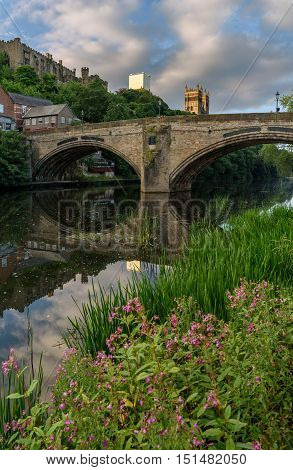 Wild flower on the bank of River Weir flowing through the Durham City England.