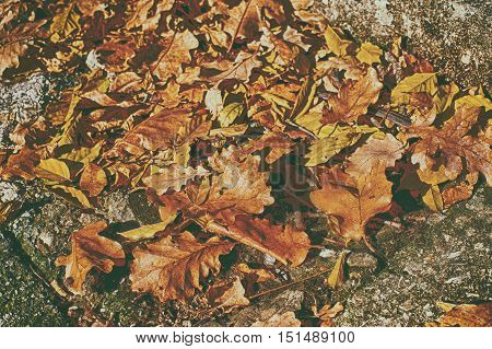 Toned dry oak leaves on the sidewalk, muted colors