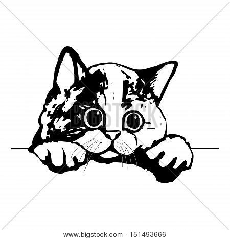 Graphic picture of a cute kitty. The head of a cat on white background vector illustration