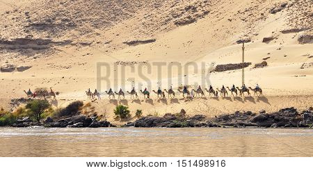 Side view of unrecognizable bedouins on camels walking along river in sunlight
