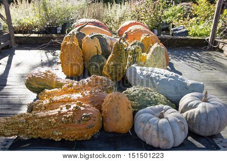 Gourds and pumpkins on display at a local farm stand
