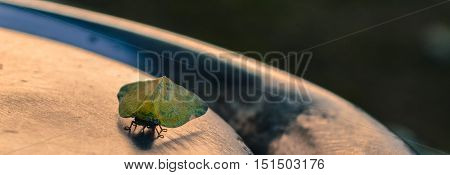 Closeup of a leaf hopper resting on a metal post