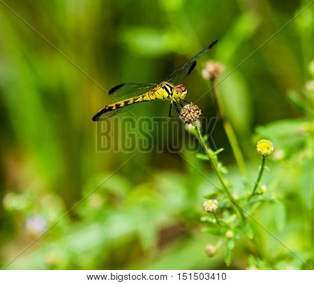 closeup of a yellow dragonfly on a plant witha blurred background