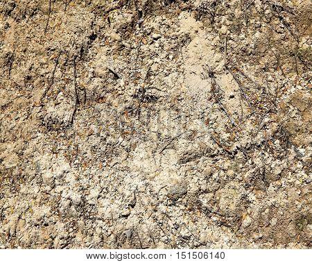 Ground Texture In Wai-o-tapu Geothermal Area. Rotorua, Nz