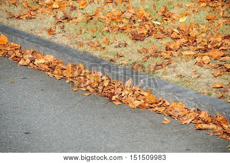 fallen leaves accumulating at curb side in autumn