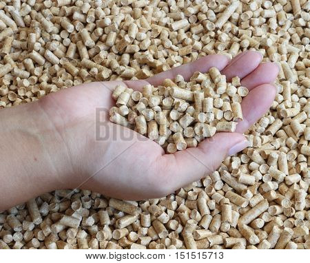 Wood pellets. Bio fuel. Wood pellets in female hands. The cat litter.