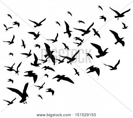 Flying birds flock vector illustration isolated on white background. Silhouette of black pigeon hawk and eagle