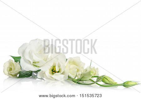 corner fron beautiful white eustoma flowers isolated on white background