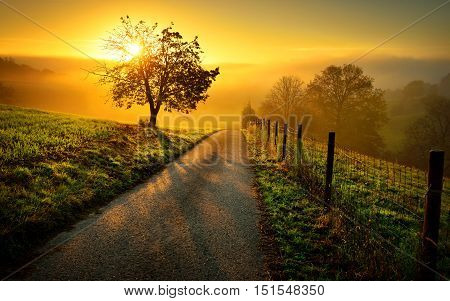 Idyllic rural landscape on a hill with a tree on a meadow at sunrise a path leads into the warm gold light