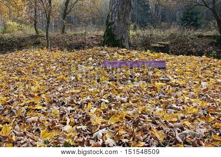 Image of the bench covered in fallen leaves