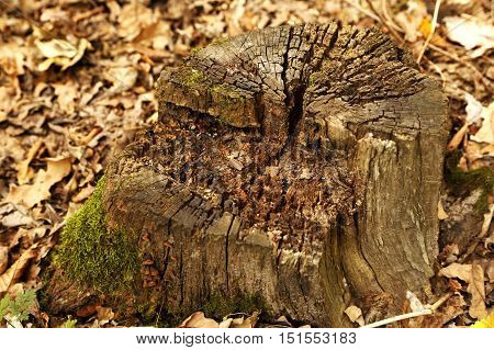 Texture Timber Tree Stump