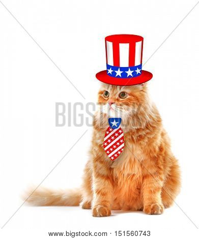 Cute cat in Uncle Sam hat and tie on white background. USA holiday concept.