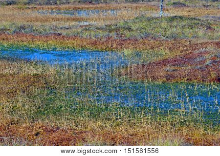Waterlogged bog with many beautiful autumn colors.