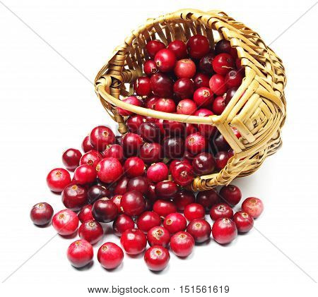 Cranberries near the basket on white background closeup