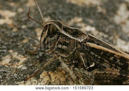 nature, animals, fauna, insects, grasshoppers, locusts, macro, Kuznechikova, tettigonioidea's, Orthoptera, long mustache