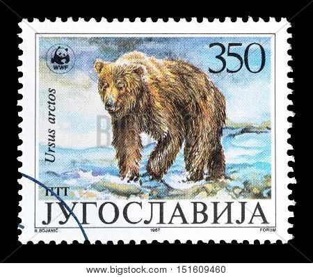 YUGOSLAVIA - CIRCA 1987 : Cancelled postage stamp printed by Yugoslavia, that shows Brown Bear.