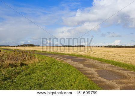 Bridleway And Bullrushes