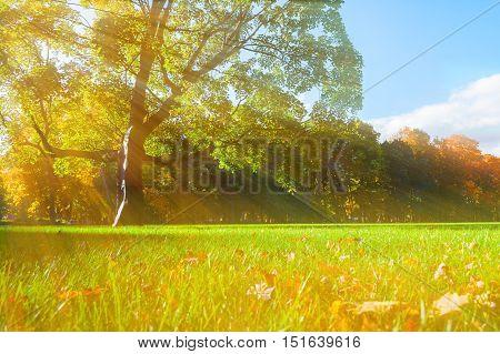 Autumn picturesque park - sunny autumn trees lit by sunlight. Autumn nature in sunshine.Nice autumn park nature. Sunny autumn landscape of autumn park with golden trees in sunbeams. Autumn nature