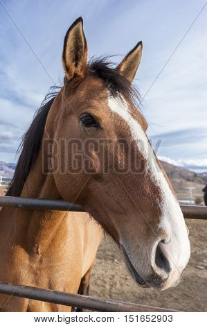 Close up portrait of horse in the corral.