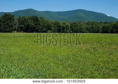 Zena Cornfield in Woodstock, NY with a line of trees in the middle ground and Overlook Mountain in the background.