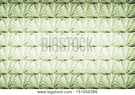 Texture made of plants. Green texture of a plant called Yucca.