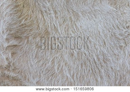 Detailed macro picture of cow skin. texture background.