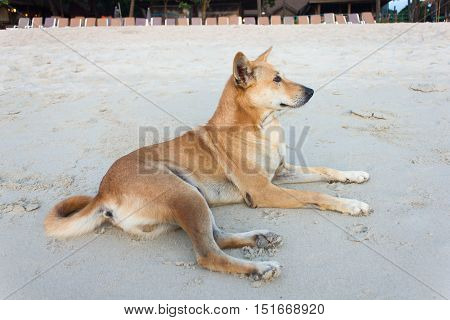 Dog Lying On The Beach