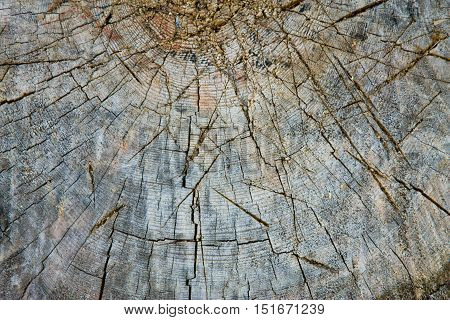 Wood Texture Saw Cut With Crack