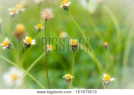 Grass Flower Causes The Allergic Symptoms/ Grass Flowers For Background.