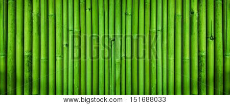 Green bamboo fence texture, bamboo texture background