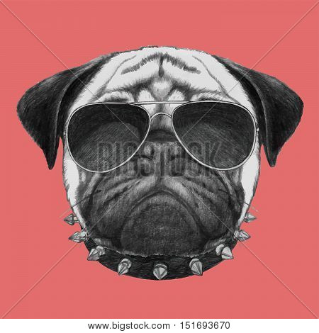 Hand drawn portrait of  Pug Dog with collar and sunglasses.