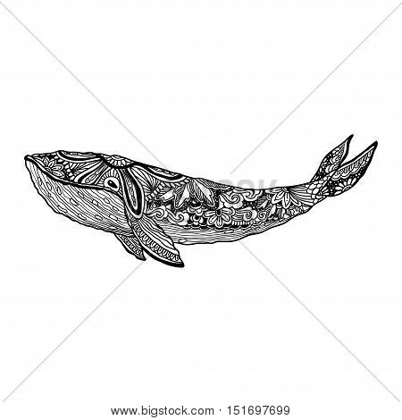 Whale, Vector zentangle whale print, adult coloring page. Hand drawn artistically Whale, ornamental patterned Whale illustration. Sea Animal collection. Whale Sketch, tattoo, posters, t-shirt design.